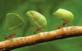 Funghi e formiche. Il cibo e il destino